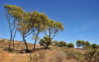 Espacios Naturales - Costa de Azahar (Rustic MED - www.rusticmed.es)